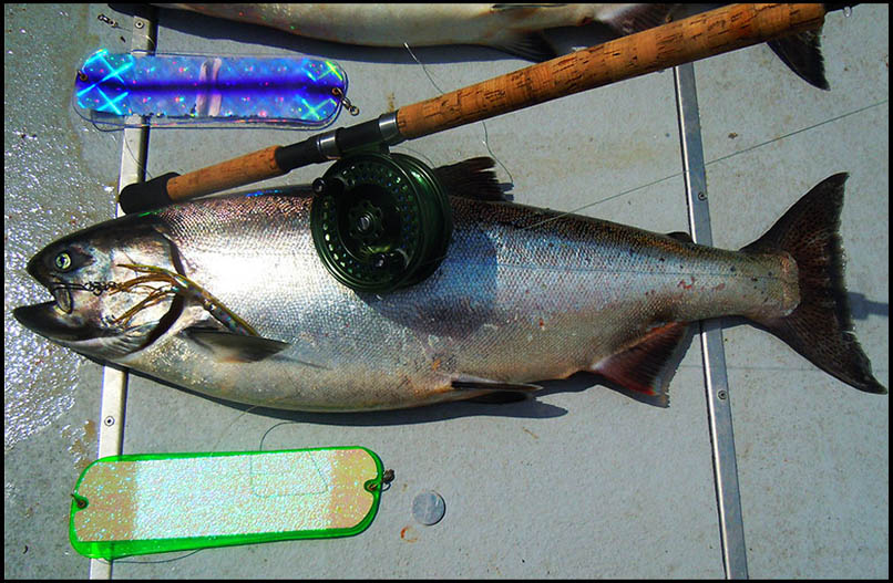 Salmon caught on Supertackle Get Reel at Sooke, British Columbia